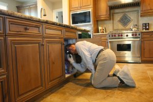 Home pest inspection - kitchen sink infestations